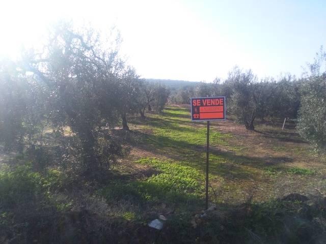 imagen 1 de Venta de finca con olivos en Pilas (Sevilla)