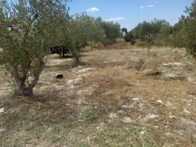imagen 1 de Venta de terreno rústico en Los Palacios y Villafranca (Sevilla)