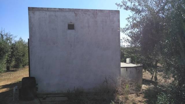imagen 1 de Venta de finca con olivos en Pilas