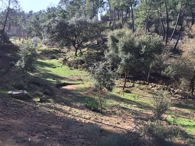 imagen 1 de Venta de finca en entorno natural ubicada en Monesterio