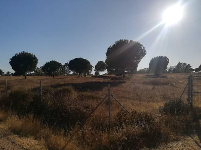 imagen 1 de Venta de finca ideal para instalación hípica en Sevilla
