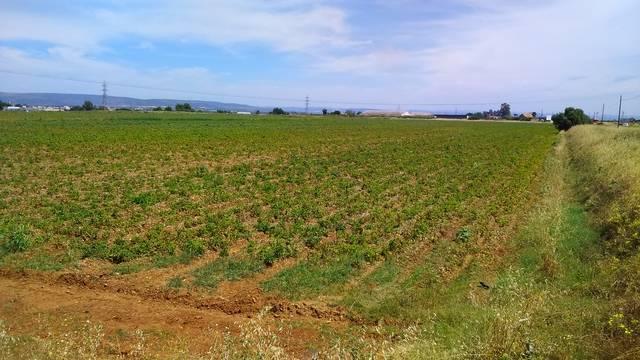 imagen 1 de Venta de finca de regadío en Brenes (Sevilla)