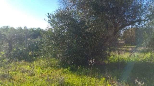 imagen 1 de Venta de parcela en Tomares (Sevilla)