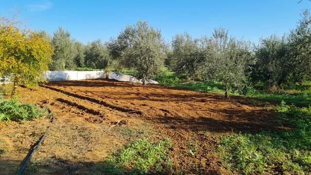 imagen 1 de Venta de olivar con casa