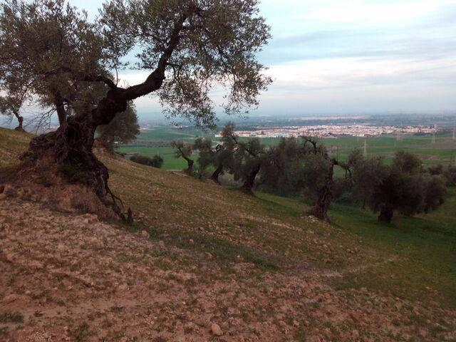 imagen 1 de Finca rústica cerca de Sevilla