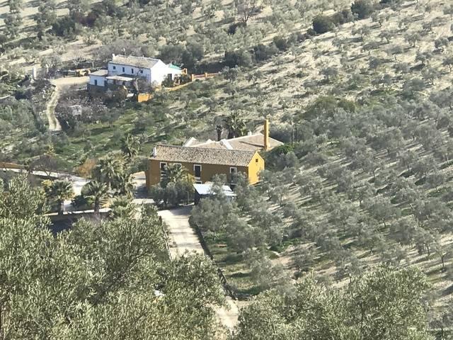 imagen 1 de Venta de finca con caserío y olivar en Osuna
