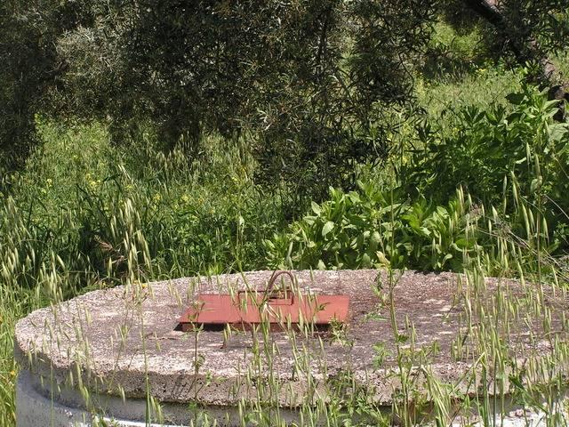 imagen 1 de Venta de finca de olivar en Pruna (Sevilla)