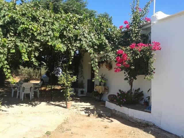 imagen 1 de Venta de finca con casa, nave y olivar en Cantillana