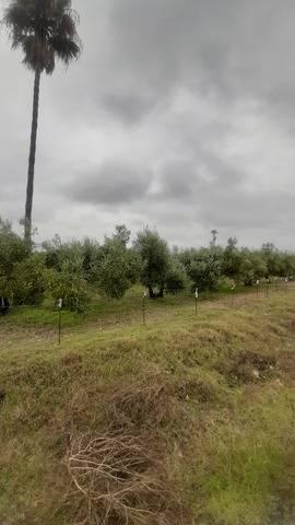 imagen 1 de Venta de terreno con casa y frutales