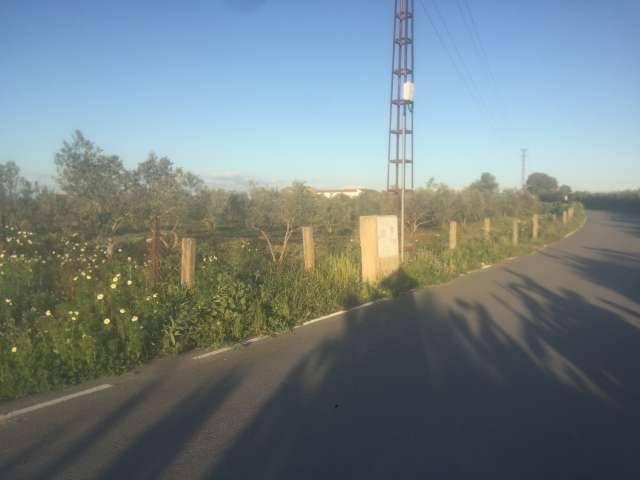 imagen 1 de Venta de parcela con olivos y buen acceso en Utrera