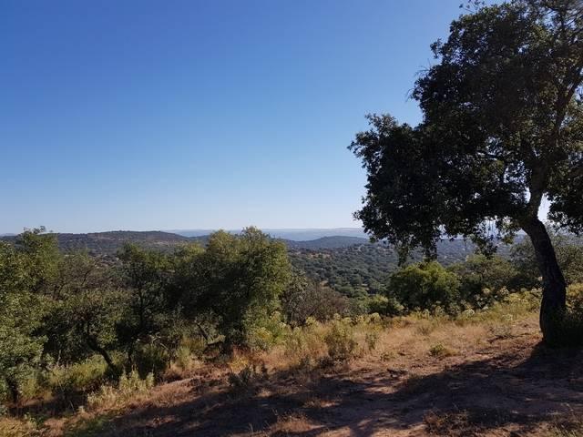imagen 1 de Venta de finca para porcino en Castilblanco de los Arroyos