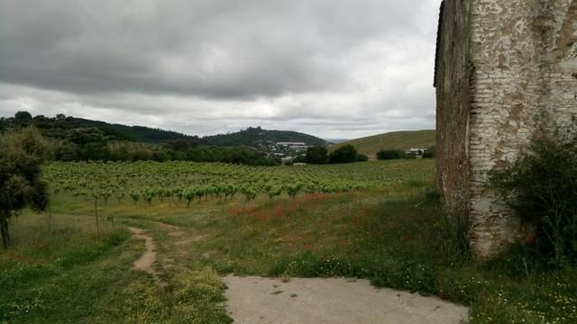 imagen 1 de Venta de bonita finca con bodega y cortijo en Cazalla de la sierra