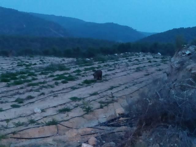 imagen 1 de Venta de finca agrícola en Gandesa
