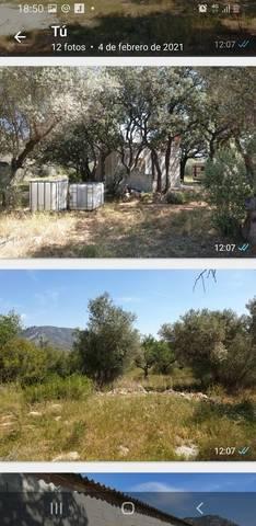 imagen 1 de Venta de finca de olivos vallada en La Senia