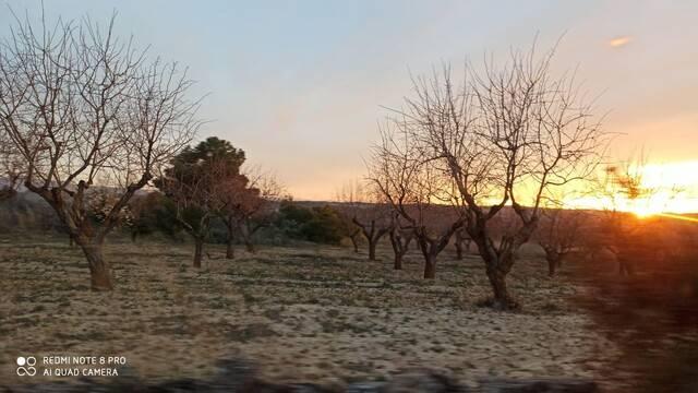 imagen 1 de Venta de finca de almendros en Gandesa