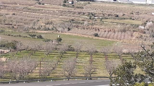 imagen 1 de Venta de finca con almendros, olivo y algarrobos en Tarragona