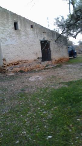 imagen 1 de Venta de finca rústica de olivos con caseta en L´Ampolla (Tarragona)