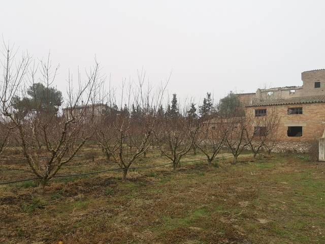 imagen 1 de Terreno con construcción en Mora d´Ebre (Tarragona)