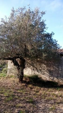imagen 1 de Venta de olivar en Benifallet (Tarragona)