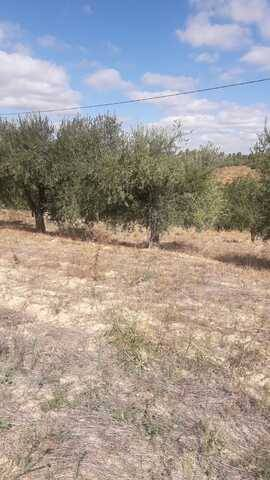 imagen 1 de Venta de olivar en Falset (Tarragona)