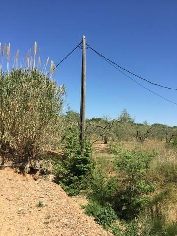 imagen 1 de Venta de terreno de avellanos en Constanti (Tarragona)