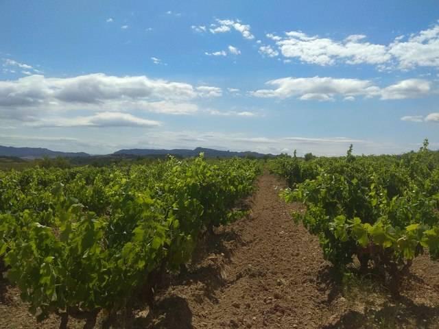 imagen 1 de Venta de viñedo ecológico en Gandesa (Tarragona)