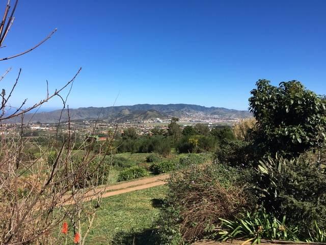 imagen 1 de Venta de terreno con frutales en Tenerife
