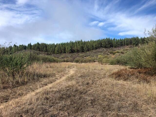 imagen 1 de Venta de finca ubicada en Reserva Natural (Tanque de Arriba)