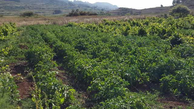 imagen 1 de Venta de terreno rústico en Los Baldíos (Tenerife)