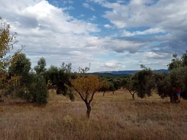 imagen 1 de Venta de finca de olivos y almendros en La Fresneda (Teruel)