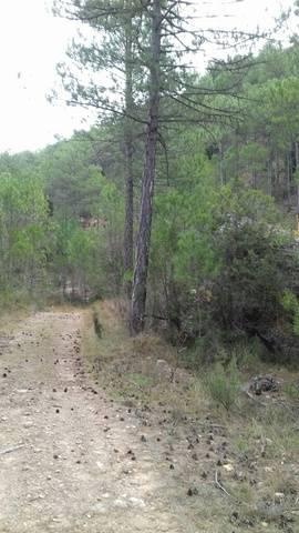 imagen 1 de Venta de pequeña terreno de pinar en Monroyo (Teruel)