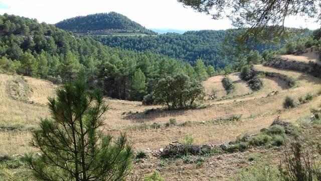 imagen 1 de Venta de finca con casa de aperos en Monroyo (Teruel)