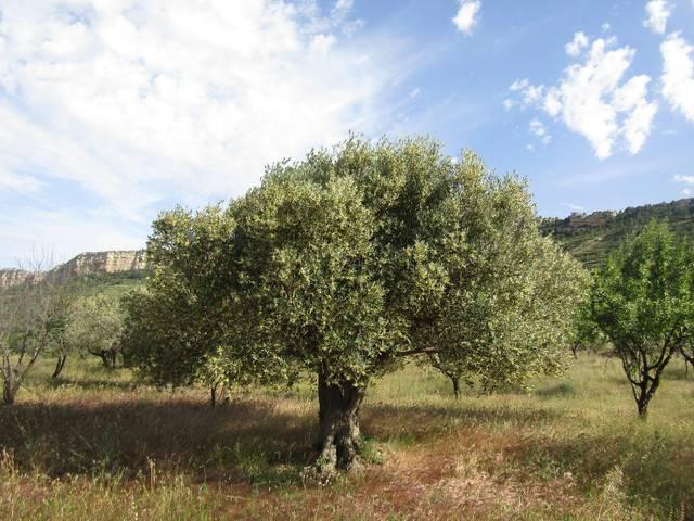 imagen 1 de Venta de finca rústica con cuarto de aperos en Castellote (Teruel)