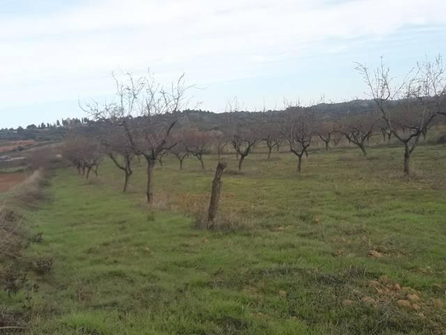 imagen 1 de Venta de finca de almendros en Cretas (Teruel)