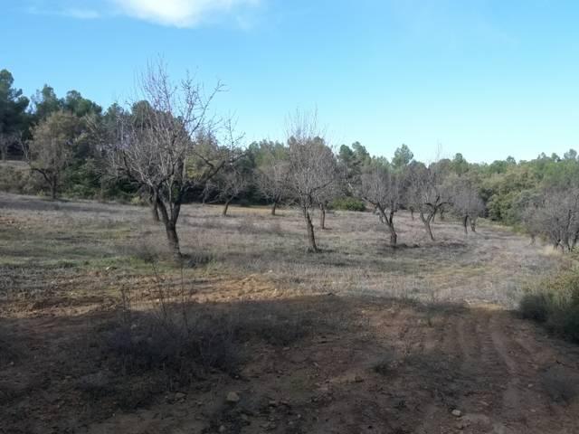 imagen 1 de Venta de finca de almendros en Creta