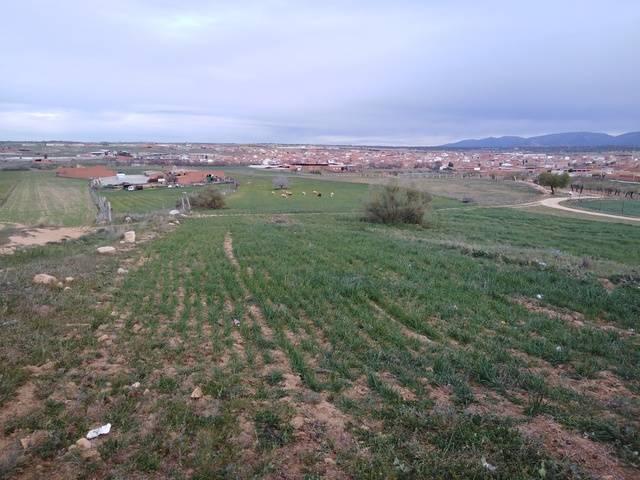 imagen 1 de Venta de finca de secano en Menasalbas (Toledo)