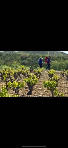 imagen 1 de Venta de viñedo en Manzaneque (Toledo)