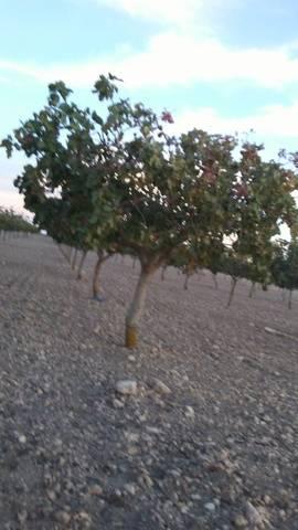 imagen 1 de Venta de terreno ideal para cultivo de pistacho en Toledo