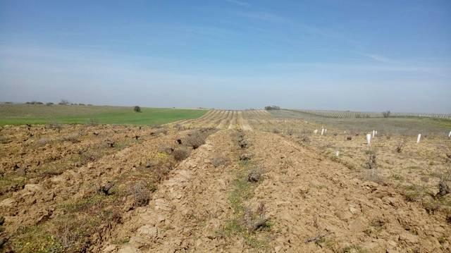 imagen 1 de Venta de viña de secano en Fuensalida (Toledo)