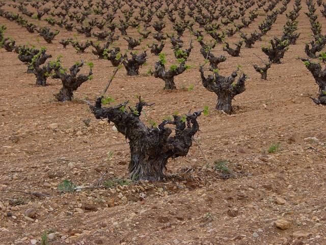 imagen 1 de Venta de viñedo en Mora (Toledo)
