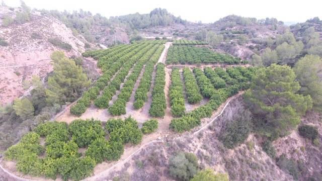 imagen 1 de Venta de finca de naranjos en Xátiva