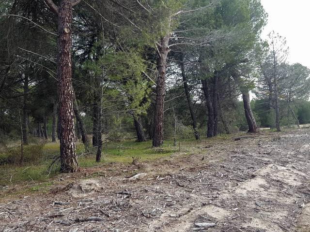 imagen 1 de Venta de pinar en Hornillos de Eresma (Valladolid)