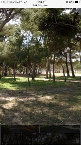 imagen 1 de Venta de pinar en Iscar (Valladolid)