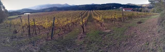 imagen 1 de Venta de terreno con viñedo en Ibarrangelu (Vizcaya)