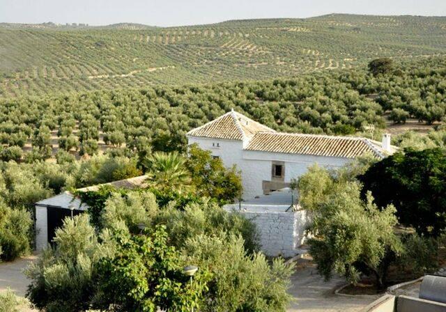 imagen 1 de Venta de almazara en funcionamiento en Jaén