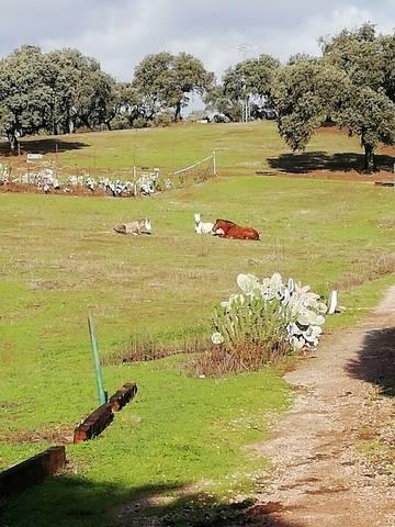 imagen 1 de Venta de finca ganadera en Cáceres