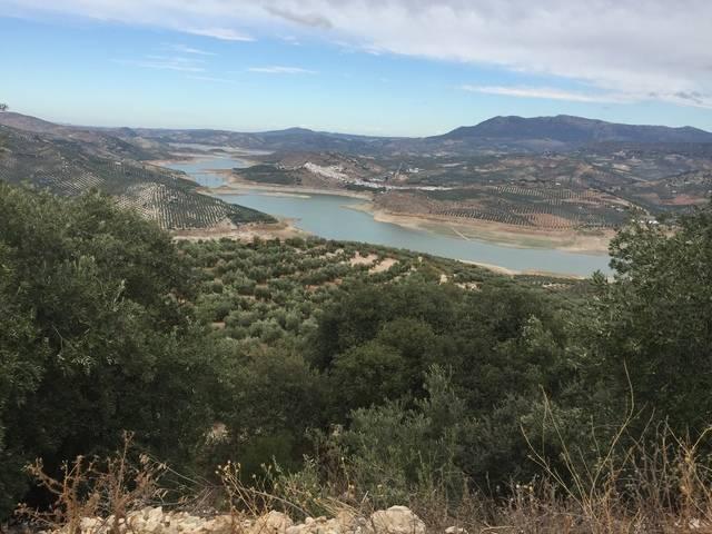 imagen 1 de Venta de finca de olivos en Córdoba
