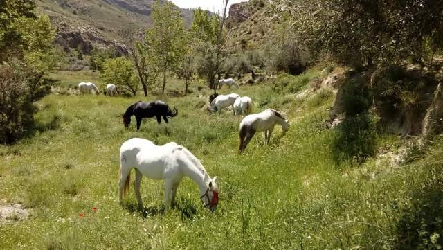 imagen 1 de Venta de cortijo en Caniles (Granada)