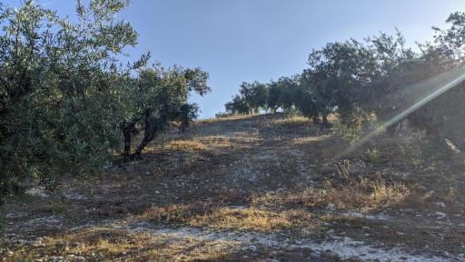 imagen 3 de Finca olivar Valderrubio