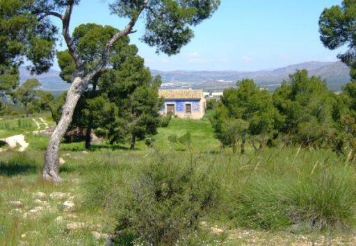 imagen 1 de Finca Agrícola en Murcia